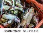 fish filled crate in caribbean... | Shutterstock . vector #510141511