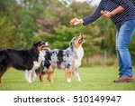 woman trains with two...   Shutterstock . vector #510149947