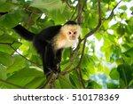 white headed capuchin monkey in ... | Shutterstock . vector #510178369