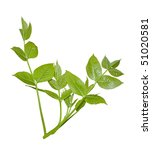 green branch isolated on white | Shutterstock . vector #51020581