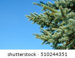 pine tree branches on blue sky...   Shutterstock . vector #510244351