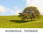 Two trees on a hill on grassy hill. - stock photo