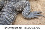 a leg of an alligator lying in... | Shutterstock . vector #510293707