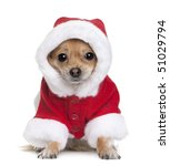 Chihuahua In Santa Coat  1 Yea...