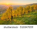 autumn landscape vineyard with... | Shutterstock . vector #510347059