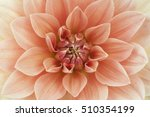 Light Red Dahlia Flower Macro