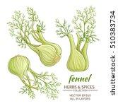 fennel vector set | Shutterstock .eps vector #510383734