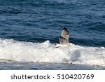 bird flying along the... | Shutterstock . vector #510420769