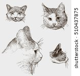 sketches of the cats heads | Shutterstock .eps vector #510437875