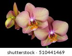 close up of multicolor orchid... | Shutterstock . vector #510441469