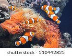 sea anemone and clown fish in... | Shutterstock . vector #510442825