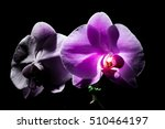 purple orchid on black... | Shutterstock . vector #510464197