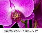 close up of pink orchid flower. ... | Shutterstock . vector #510467959