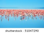Flocks Of Flamingo. Africa....