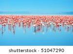 Flocks Of Flamingo. Africa....