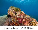 coral | Shutterstock . vector #510540967