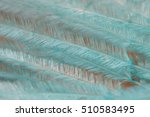 Small photo of Soft turquoise feather.