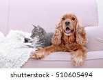 Stock photo cute dog and cat together on couch at home 510605494