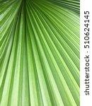 green fan leaf zoom in  close... | Shutterstock . vector #510624145