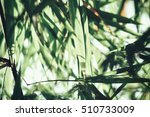 Bamboo Leaves With Shadow
