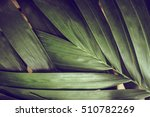 close up of detailed rainforest ... | Shutterstock . vector #510782269
