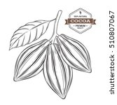 cocoa pods vector illustration  ... | Shutterstock .eps vector #510807067