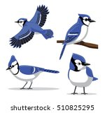 Cute Blue Jay Poses Cartoon...