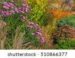 the aster  aster dumosus  in an ... | Shutterstock . vector #510866377