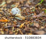 snail creeps on a footpath | Shutterstock . vector #510883834