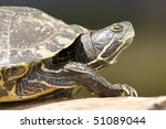 portrait of red eared turtle ... | Shutterstock . vector #51089044
