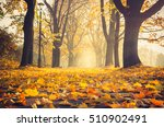 Autumn Colorful Tree Alley In...