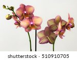 close up of pastel orchid... | Shutterstock . vector #510910705