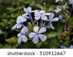 Closeup Of A Small Branch Of...