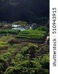 Small photo of Japanese allotment garden?