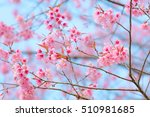 blossoming cherry trees in... | Shutterstock . vector #510981685