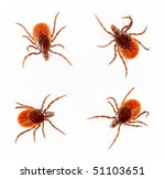 Small photo of Ticks isolated over white background. Tick is the common name for the small arachnids in superfamily Ixodoidea that, along with other mites, constitute the Acarina.