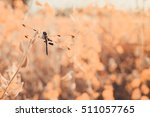 Dragonfly And Leaves In A Fall...