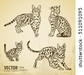 cats collection   vector... | Shutterstock .eps vector #511091095