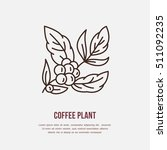 vector line icon of coffee tree.... | Shutterstock .eps vector #511092235