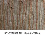 Bark Tree Texture  Palm
