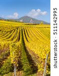 Small photo of Vineyards of alsace - close to small village Hunawihr, France