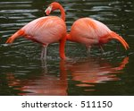 Two Flamingos in Water - stock photo