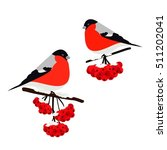 bullfinch on rowan branch...   Shutterstock .eps vector #511202041