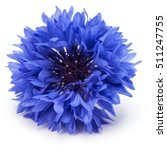 blue cornflower herb or... | Shutterstock . vector #511247755