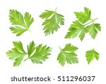 parsley leaf isolated on white. ... | Shutterstock . vector #511296037