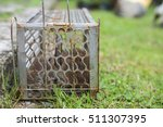 Small photo of Rats in a cage trap address-forsaken freedom