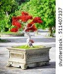 Scenic Red Bonsai Tree Growing...
