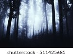 dark forest at night fantasy... | Shutterstock . vector #511425685