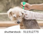 tick and flea prevention for a...   Shutterstock . vector #511512775