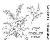 sage  vector set on white...   Shutterstock .eps vector #511567291